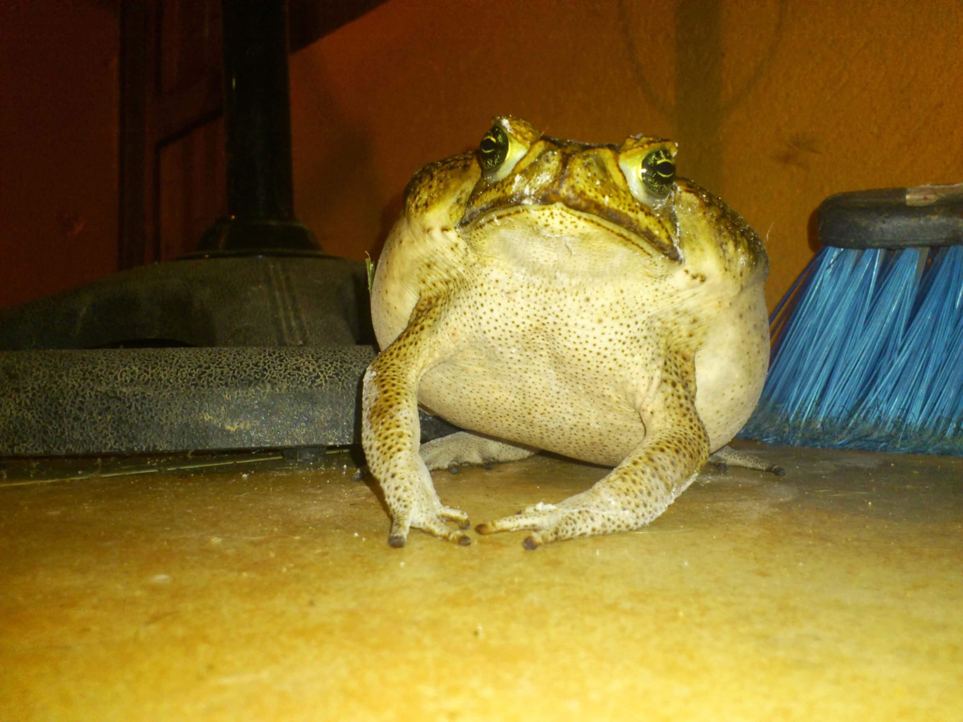 Toad Wars allaboardthefraytrain