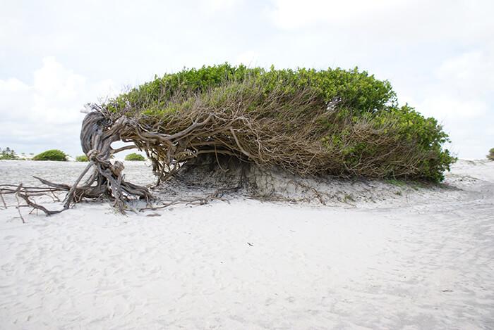 Lazy Tree Jericoacoara Allaboardthefraytrain